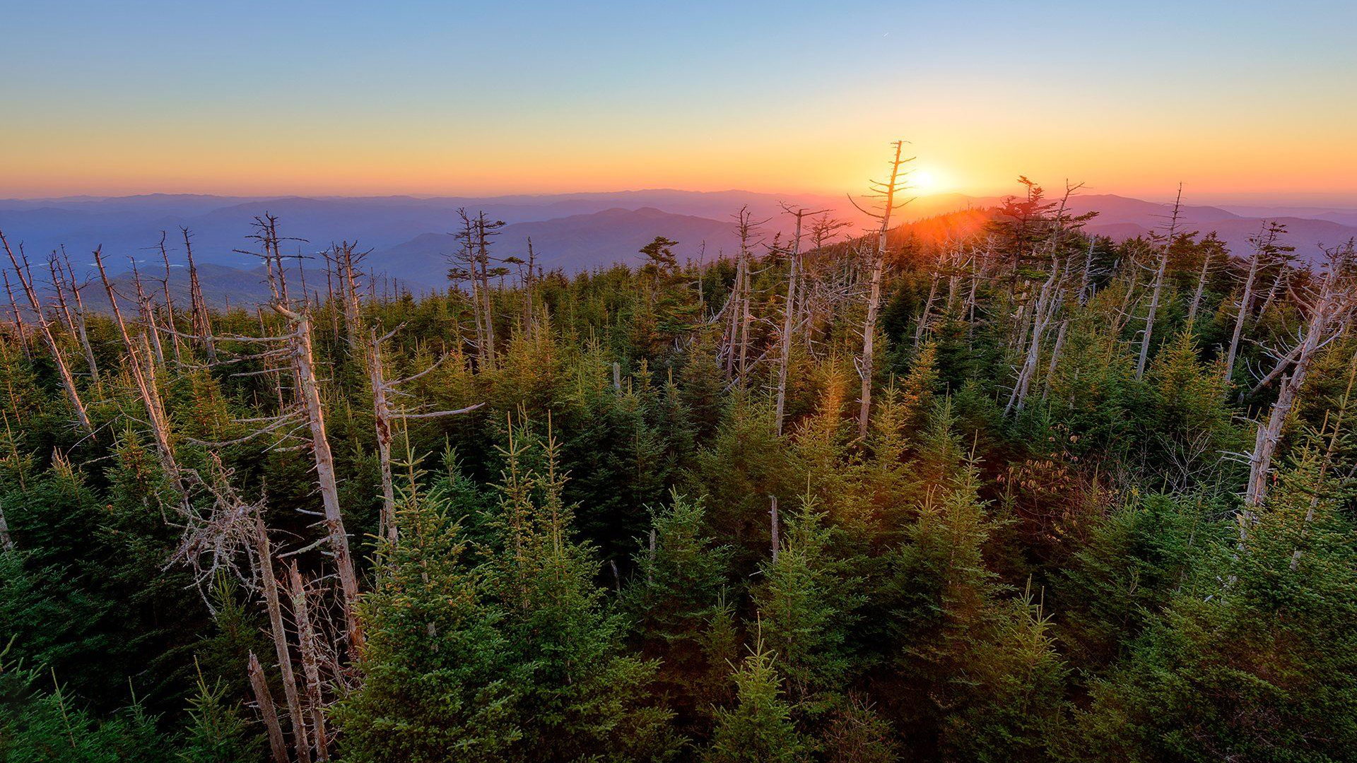 image of clingmon's dome at sunset